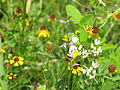 Coneflowers and mixed spring flowers (8470990277).jpg