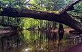 Congaree National Park (e28262a3-9691-418d-9cc4-c28c0cbcbf3c).jpg