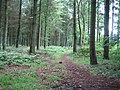 Conifer woods, Great Ridge near Sherrington - geograph.org.uk - 469630.jpg