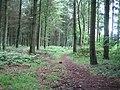 Conifer woods, Great Ridge near Sherrington - geograph.org.uk - 469630.jpg