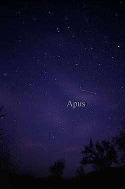 Constellation Apus.jpg