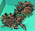 Copper and tenorite (Mesoproterozoic, 1.05-1.06 Ga; Keweenaw Peninsula area, Upper Peninsula of Michigan, USA) (17307754805).jpg