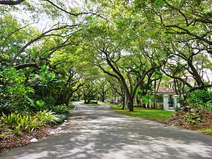 City Beautiful movement - A typical residential street in Miami's Coral Gables