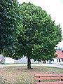 Cormeilles (60) L'arbre de la Liberté WP 20180711 10 41 31 Pro.jpg