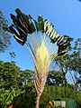 Costa Rica 92.DSCN4387-new (31129635335).jpg