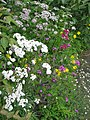 Cottage border - Flickr - peganum (3).jpg