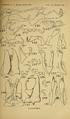 Craspedosomatidae of North America 1895 Plate VIII.png