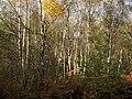 Creech Woods - geograph.org.uk - 1027326.jpg