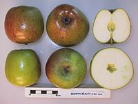 Cross section of Bedwyn Beauty, National Fruit Collection (acc. 1957-264).jpg