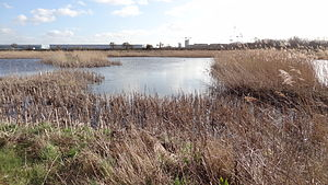 Crossness Nature Reserve - One of the many ponds in Crossness Nature Reserve