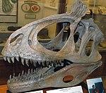 Cryolophosaurus ellioti theropod dinosaur (Hanson Formation, Lower Jurassic; Mt. Kirkpatrick, Queen Alexandra Range, Transantarctic Mountains, Antarctica) 1 (15189651827).jpg