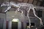 Cryolophosaurus ellioti theropod dinosaur (Hanson Formation, Lower Jurassic; Mt. Kirkpatrick, Queen Alexandra Range, Transantarctic Mountains, Antarctica) 8 (45243511525).jpg