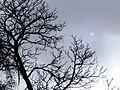 Curico, sol apagado (9378816279).jpg