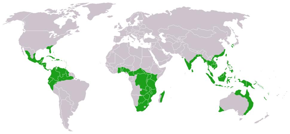 Cycads world distribution