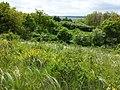 Cytisus procumbens + Stipa pennata ss. orig. sl5.jpg