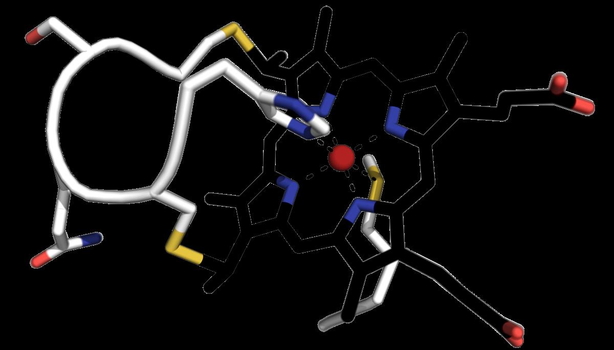 Cytochrome C Family Wikipedia