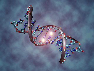 DNA methylation Biological process