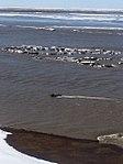 Dalton Highway flooding, May 20, 2015 (17988350419).jpg