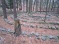 Damme Waldlabyrinth.JPG