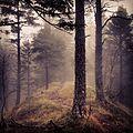 Dark-forest-combo-1.JPG