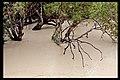 Darling River in flood Menindee-1 (5141357582).jpg