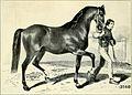 Das anglo-normännische Pferd - mit besonderer Berücksichtigung seiner Verwendung in Deutschland (1910) (14778099415).jpg