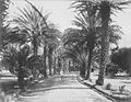 Date Palm Avenue, Queen's Hospital, Honolulu (PP-41-3-008).jpg