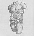 De humani corporis fabrica (Of the Structure of the Human Body) MET MM71294.jpg