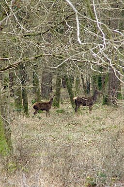 Deer in Burley New Inclosure, New Forest - geograph.org.uk - 341853