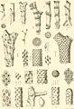 Denkschriften der Kaiserlichen Akademie der Wissenschaften, Mathematisch-Naturwissenschaftliche Classe (1877) (20844311122).jpg