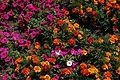 Denver Botanic Gardens (3854232107).jpg