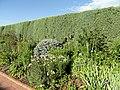 Denver Botanic Gardens - DSC01122.JPG