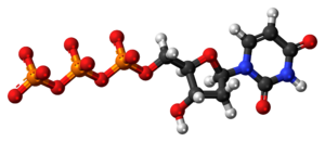Deoxyuridine triphosphate anion 3D ball.png
