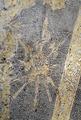 Detalj, trofébilder på bröstharnesk tillh. Hertig Fredriks rustning, samhörande med - Livrustkammaren - 41623.tif