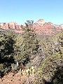 Devil's Bridge Trail, Sedona, Arizona - panoramio (17).jpg