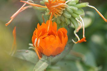Different flower.jpg