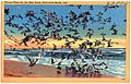 Dinner-time for the sea gulls, Rehoboth Beach, Del (63876).jpg