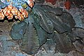 Diorama of a Permian seafloor - oldhaminid brachiopods 1 (43887712660).jpg