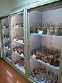 Dipartimento di biologia vegetale, collez. della manifattura brendel 12.JPG