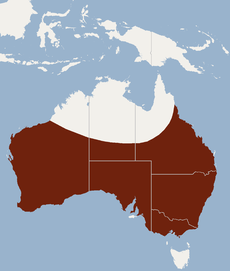 Distribution of Tadarida australis.PNG