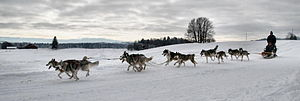 English: Dog Sled Race
