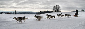 Dog sled - Racing across the snow