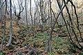 Dolina Borinske reke 13.jpg