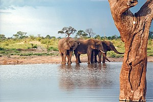 Hwange National Park - Image: Down the water hole