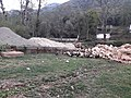 Ducks 20190401 171602.jpg