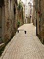 Due gatti al passeggio per le strade di Carpineto - panoramio.jpg