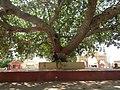 Dwaraka and around - during Dwaraka DWARASPDB 2015 (248).jpg