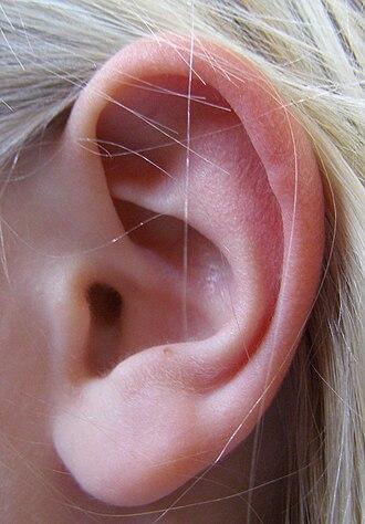 Rebus - Ear