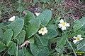 Early spring (SG) (25442572685).jpg