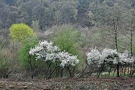 Early spring Comblain.jpg
